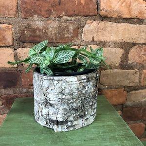 2/$27- Birch bark planter